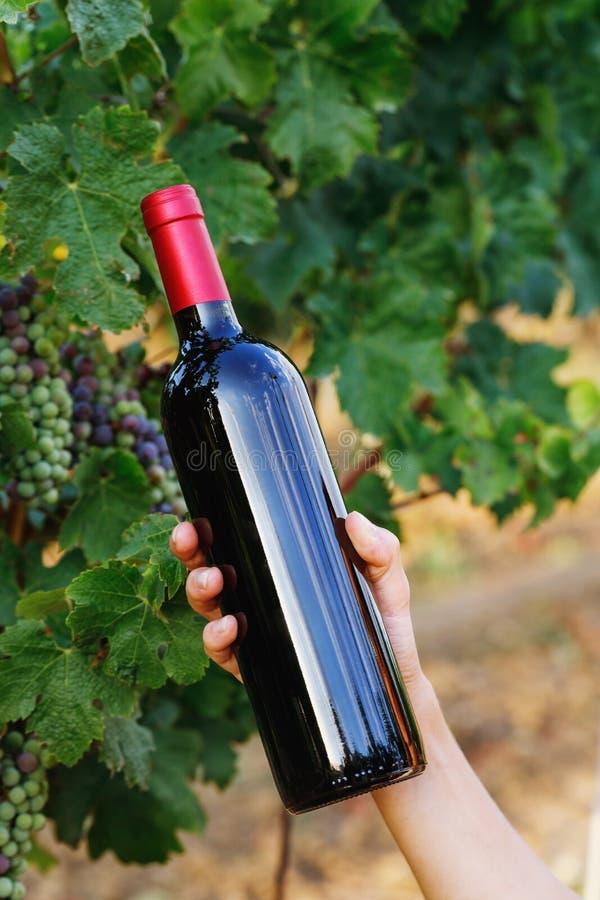 Bouteille de vin rouge dans une main sur un fond de vigne photo stock