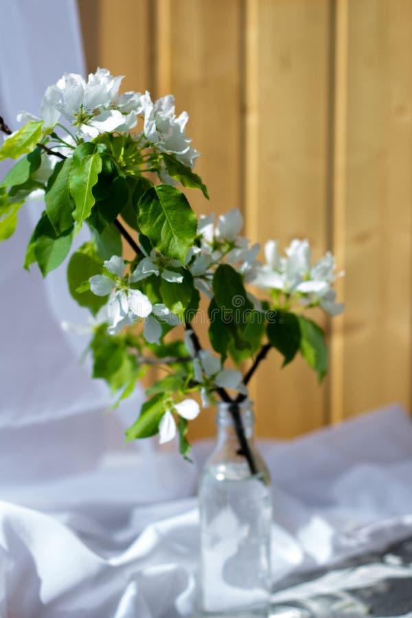 Bouteille en verre avec les branches se développantes de la cerise, pommier image libre de droits
