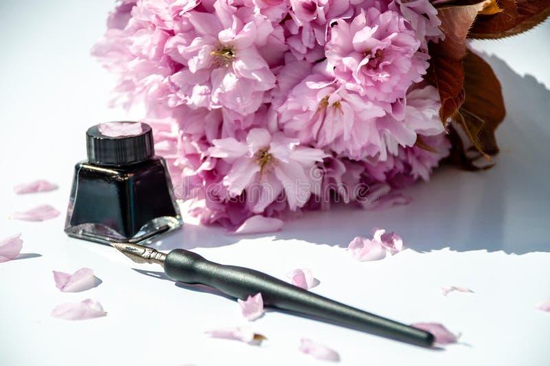 Bouteille ? l'encre de vieille encre sur le fond blanc Stylo de calligraphie de cru et bouteille d'encre Brindille de fleurs de c photo stock