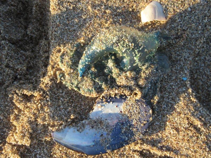 Bouteille sur la plage images libres de droits