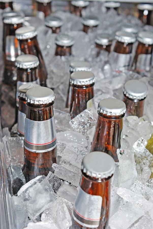 Bouteilles à bière dans la glace photos libres de droits