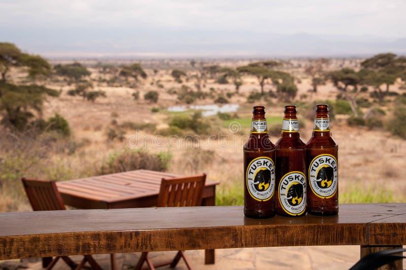 Bouteilles à bière de Tusker photographie stock libre de droits