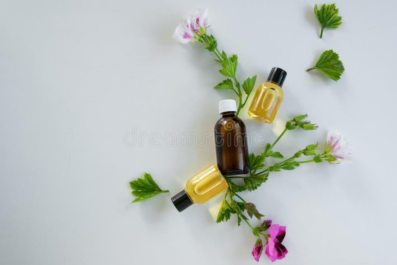 Bouteilles avec l'huile essentielle de géranium Produits de fines herbes de traitement image libre de droits