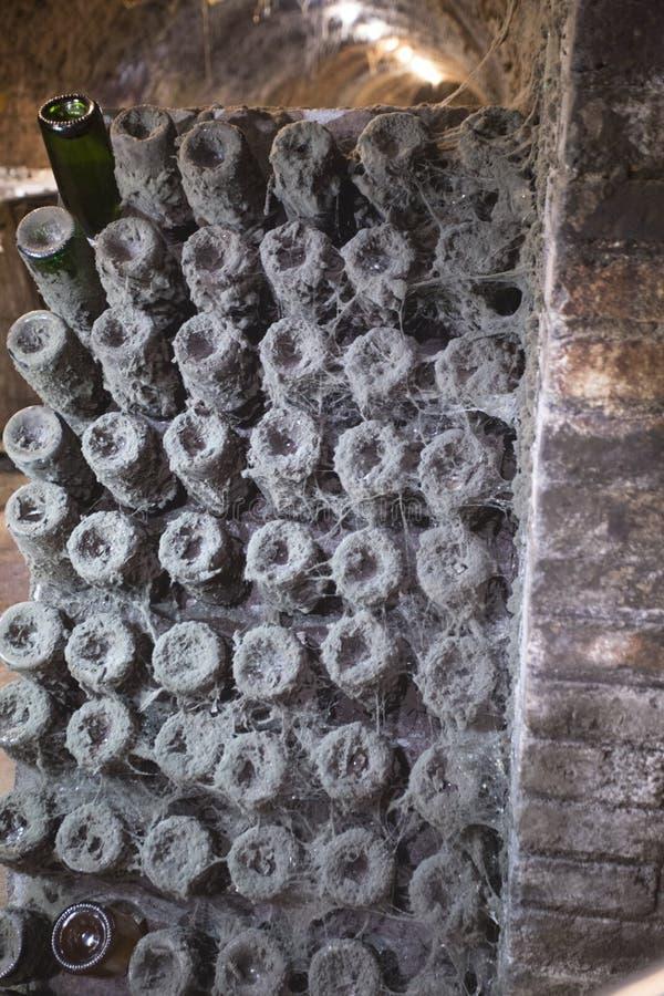 Bouteilles de vin dans la cave avec des toiles d'araignée et la poussière photos libres de droits