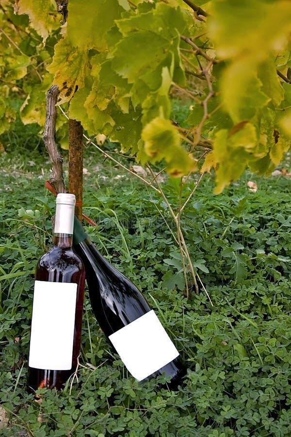 Bouteilles de vin dans un vignoble photographie stock libre de droits