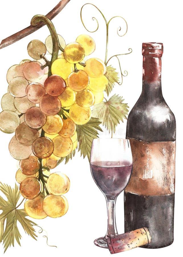 Bouteilles et verres de vin et assortiment des raisins, d'isolement sur le blanc Illustration tirée par la main d'aquarelle illustration stock
