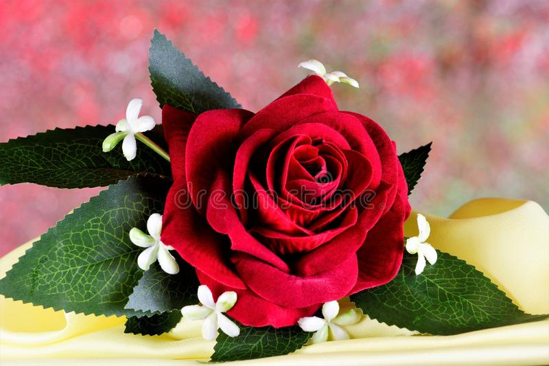 Boutonniere red rose - accessory decoration men`s suit. The tradition of decorating clothes with flowers from ancient times, as a royalty free stock images
