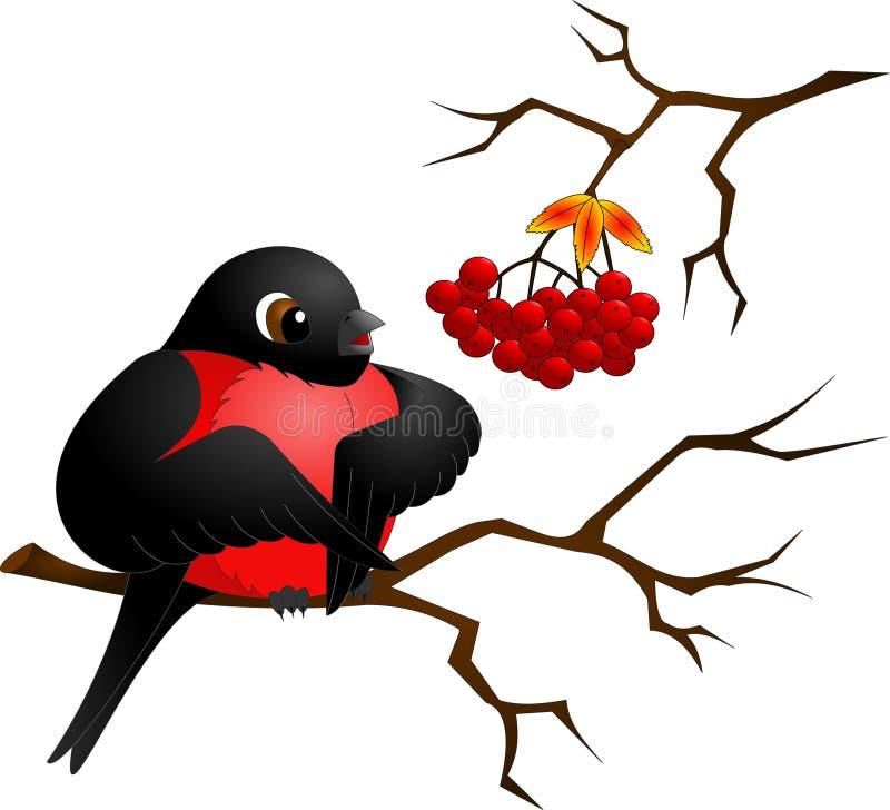 Bouvreuil noir avec le sein rouge se reposant sur une branche illustration stock