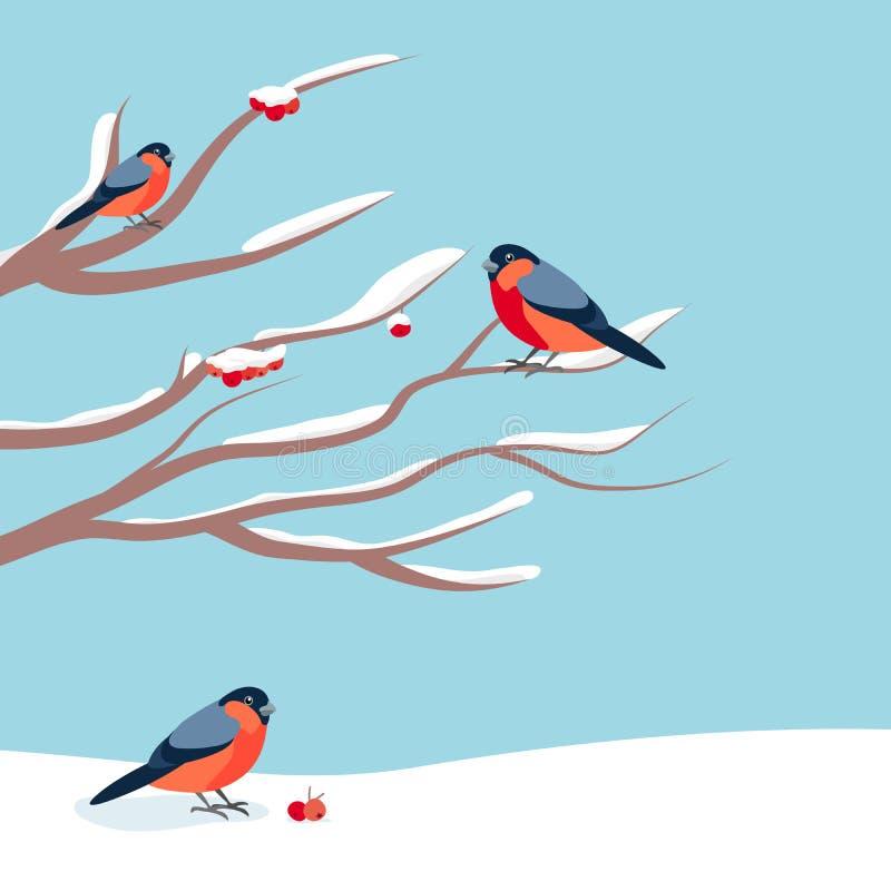 Bouvreuil se reposant sur la branche couverte de neige de la cendre de montagne Cartes de voeux de conception de Noël et de nouve illustration stock