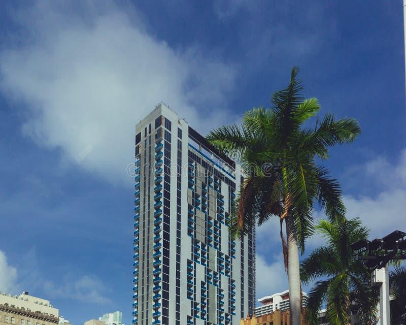 Bouwend door palm in Miami van de binnenstad, Florida, de V.S. royalty-vrije stock afbeeldingen