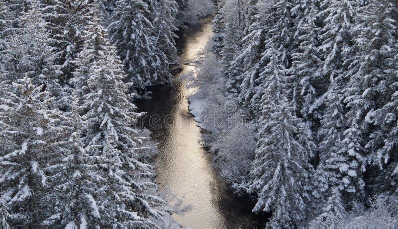 Boven de rivier door het bos in de winter met sneeuw royalty-vrije stock foto