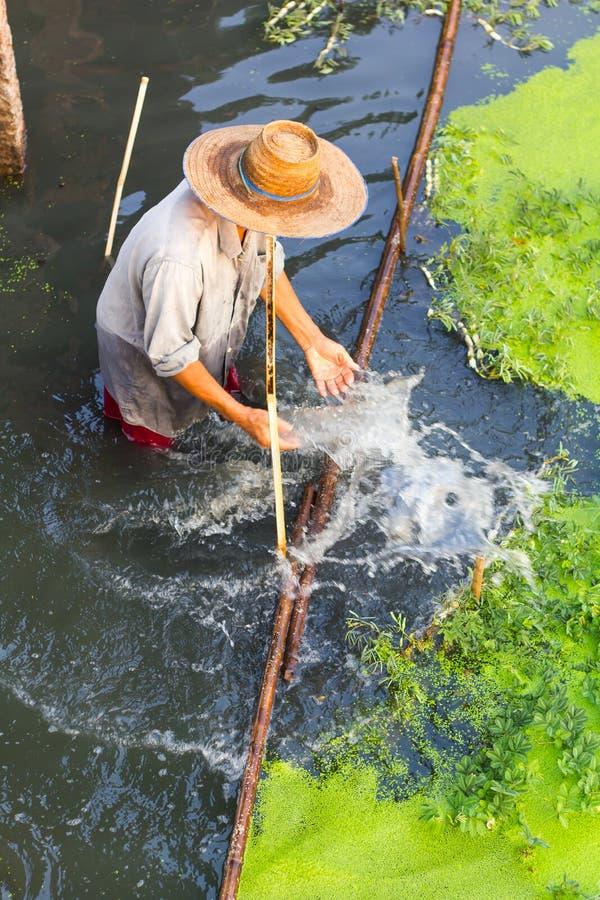 Boven landbouwer duckweeds stock fotografie