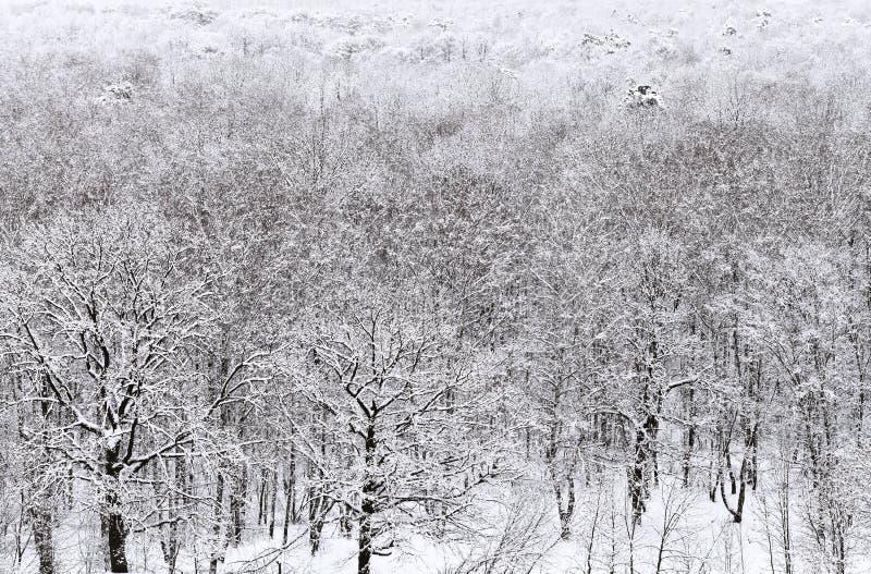 Boven mening van ingesneeuwd bos in de winter royalty-vrije stock afbeelding