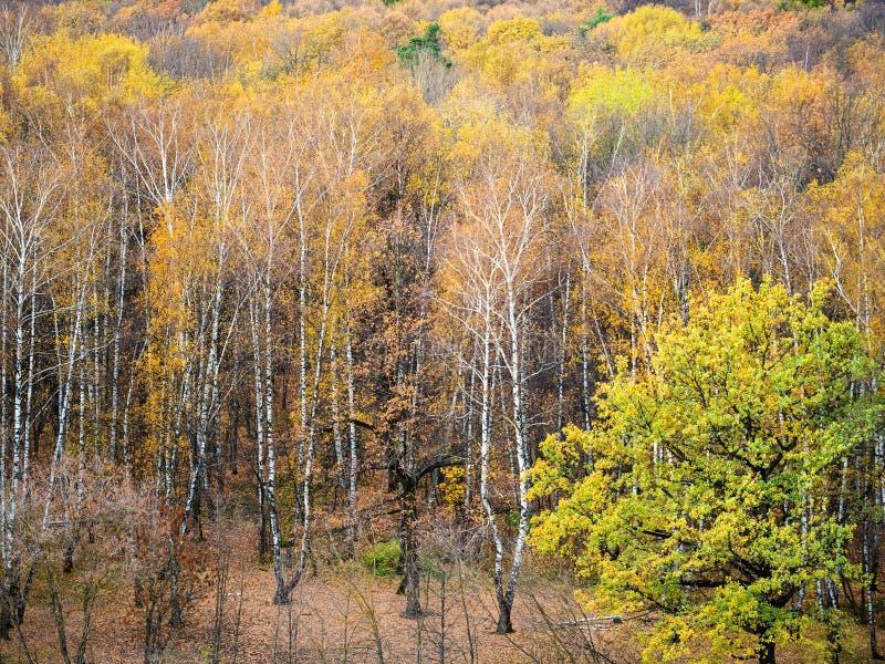 Boven mening van open plek in geel bos in de herfst royalty-vrije stock foto's