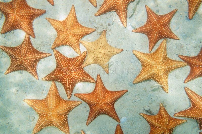 Boven vele overzeese sterren onderwater op een zandige zeebedding royalty-vrije stock fotografie