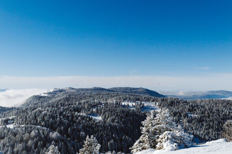 Bovenkant van de bergketting met sneeuw met pijnbomen wordt behandeld en duidelijke blauwe hemel op een zonnige dag die stock foto