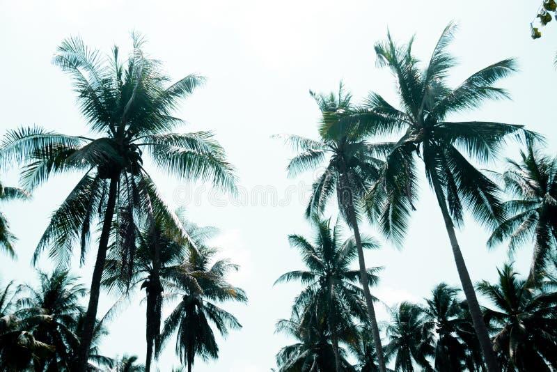 Bovenkant van palmen in blauwe hemelachtergrond De zomer vakantie Het idee van het vakantieconcept van strand en overzeese reis stock foto