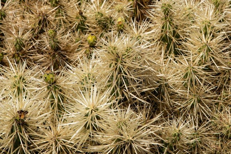 Bovenkant van stekelige cactus royalty-vrije stock fotografie