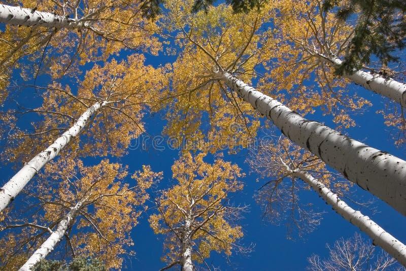 Bovenkanten van bomen. royalty-vrije stock afbeeldingen