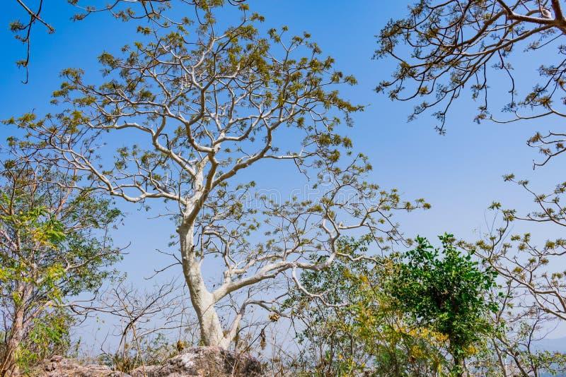 Bovenkanten van bomen met kleine die bladeren en struikvorm van de rotsachtige berggrond wordt bekeken die omhoog de zomer rijke  stock foto's