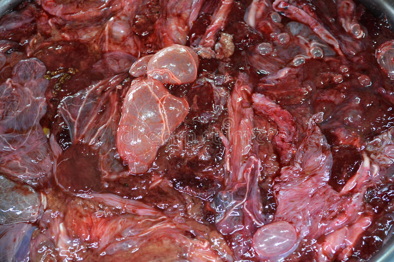 Bovine placenta. Cow for sale at Thailand market stock photos