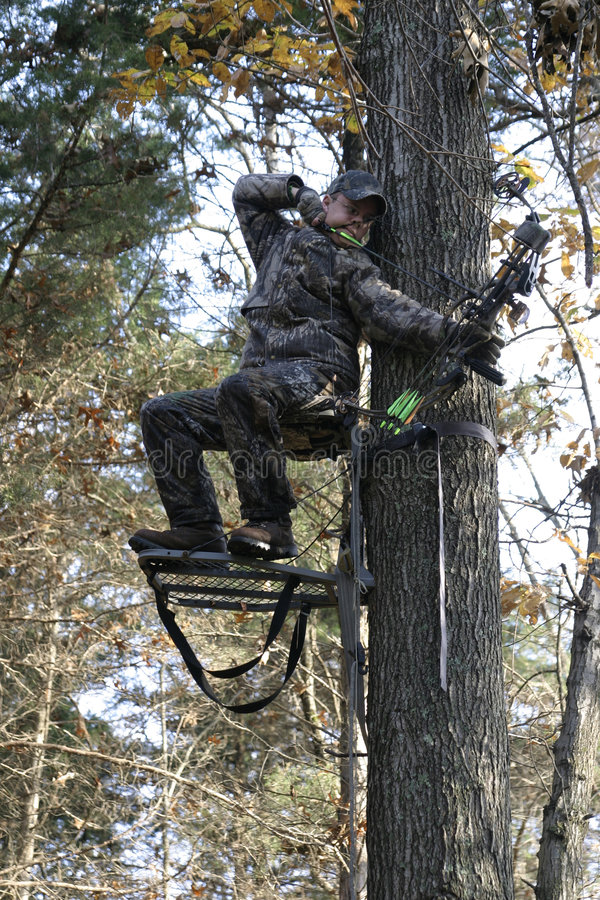 Bow hunter at full draw 3 stock photo image of tree for Free tree stand