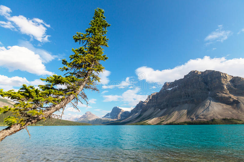 Bow lake. Icefields Parkway, Banff National Park, Canada royalty free stock photo