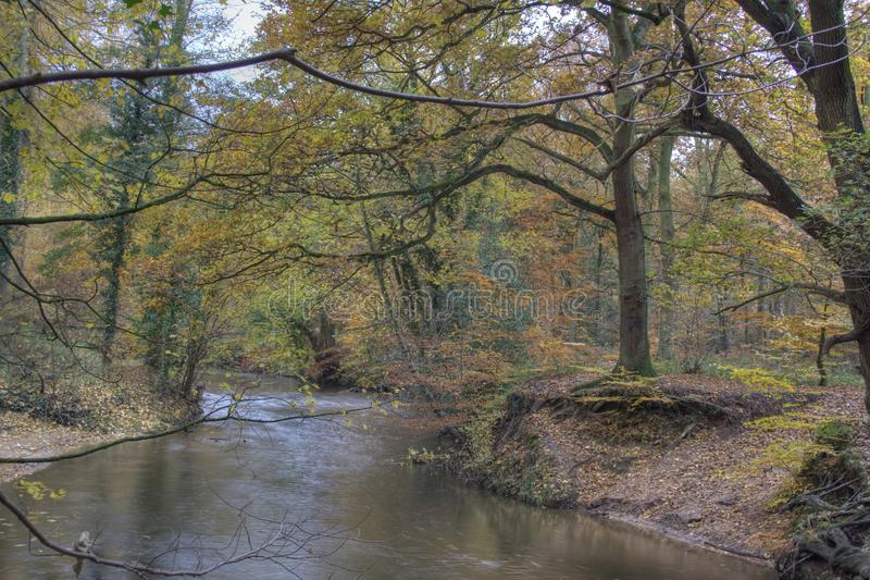 Bow In The River. Trees and river displaying autumnal colour at a bow in the River Bollin, Styal Woods, Autumn 2009 royalty free stock photo