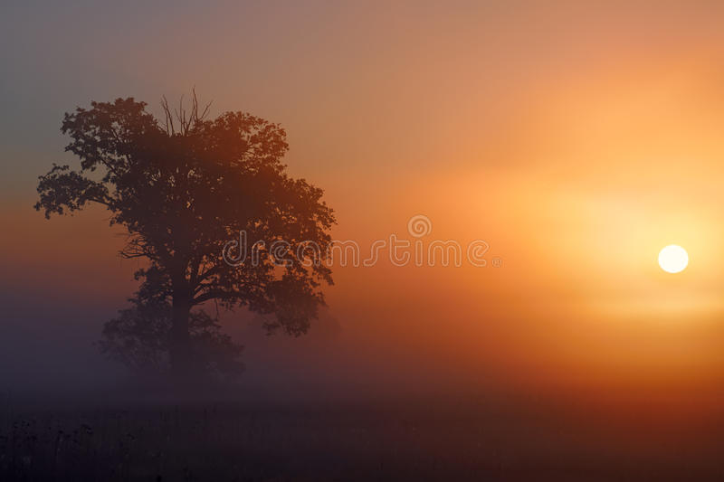 Bow to the sun royalty free stock photo