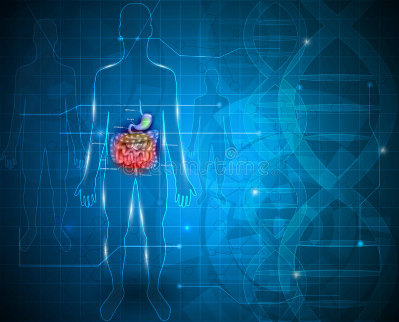 Bowels and stomach. Abstract scientific background stock illustration