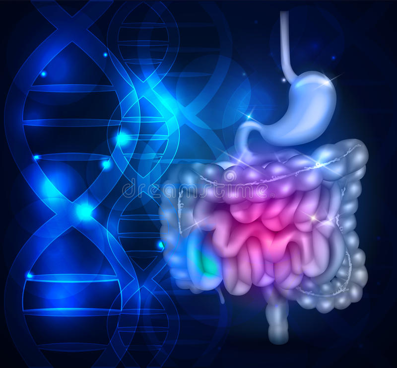 Bowels and stomach. Abstract scientific background with DNA chain vector illustration