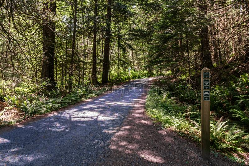 BOWEN ISLAND, CANADA - June 2, 2019: easy hiking trail in the park near Killarney Lake british columbia. Forest, green, landscape, nature, outdoor, summer stock image