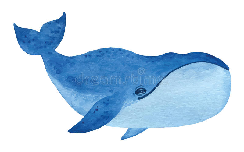 Bowhead whale. Hand drawn watercolor vector illustration