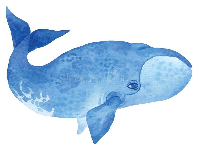 Bowhead wieloryb ilustracja wektor