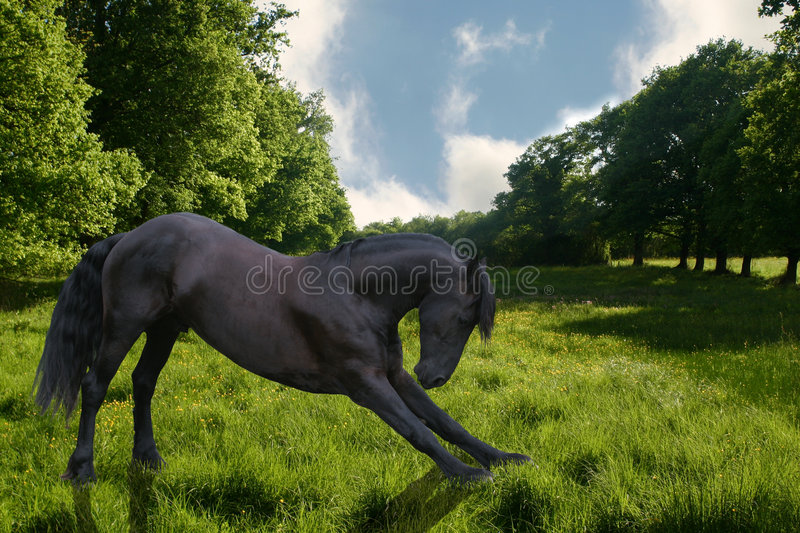 Bowing horse. A horse bowing down in a bright green field stock photo