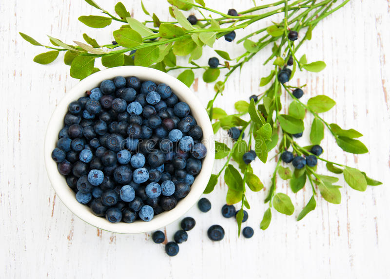 Bowl with Blueberries royalty free stock photo