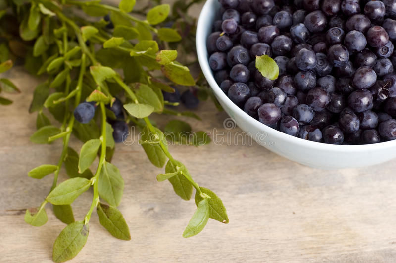 Bowl of blueberry stock photo