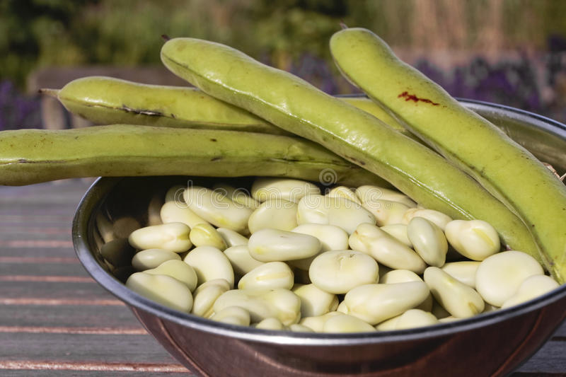 Download Bowl Of Broad Beans And Pods Stock Photo - Image: 9995470
