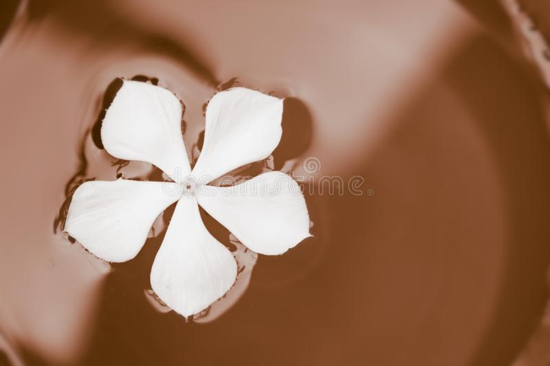 Bowl of chocolate with white flower in it stock photography