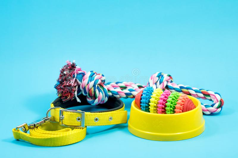 Bowl, collar with toy rope and bite rope for blue background. stock photos