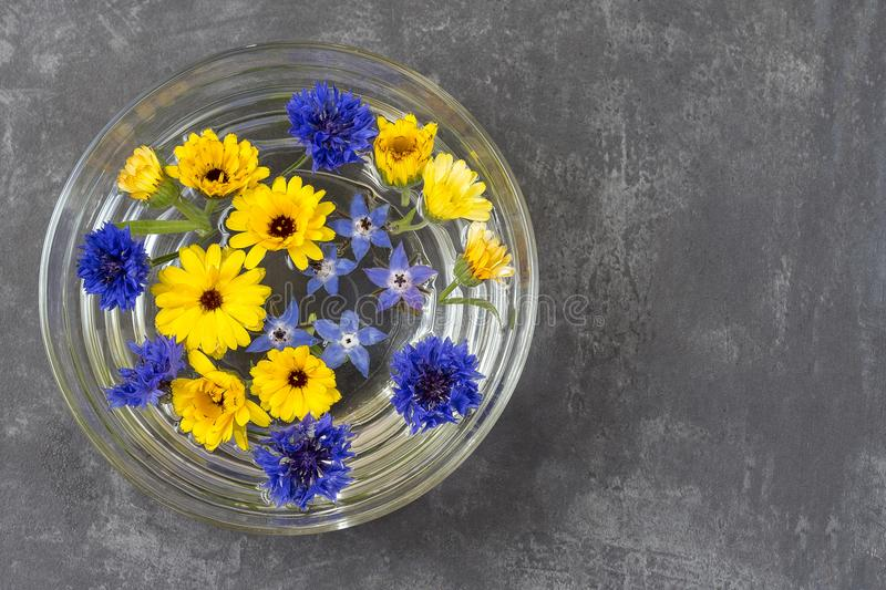 Bowl with colorful flower petals floating on surface of water. flowers floating in bowl. spa royalty free stock photos