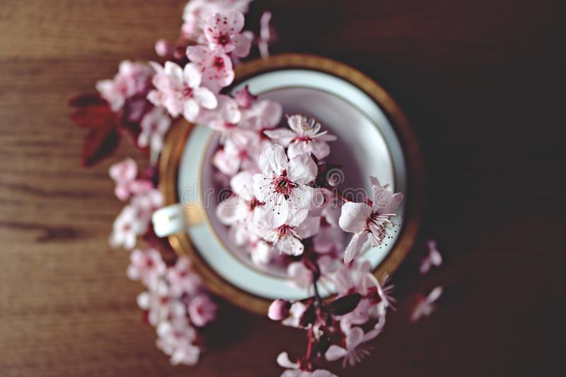 Bowl filled with apple blossom flowers stock images