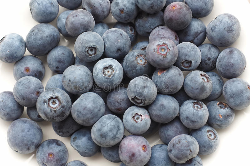 Bowl of Fresh Blueberries. Fresh blueberries in a plain white bowl, in close-up. Looking from above royalty free stock image