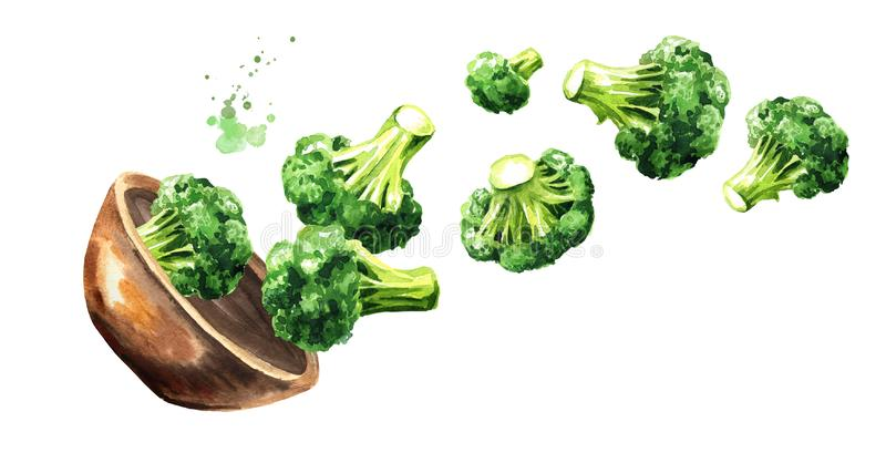 Bowl with fresh broccoli. Hand drawn horizontal watercolor illustration, isolated on white background vector illustration
