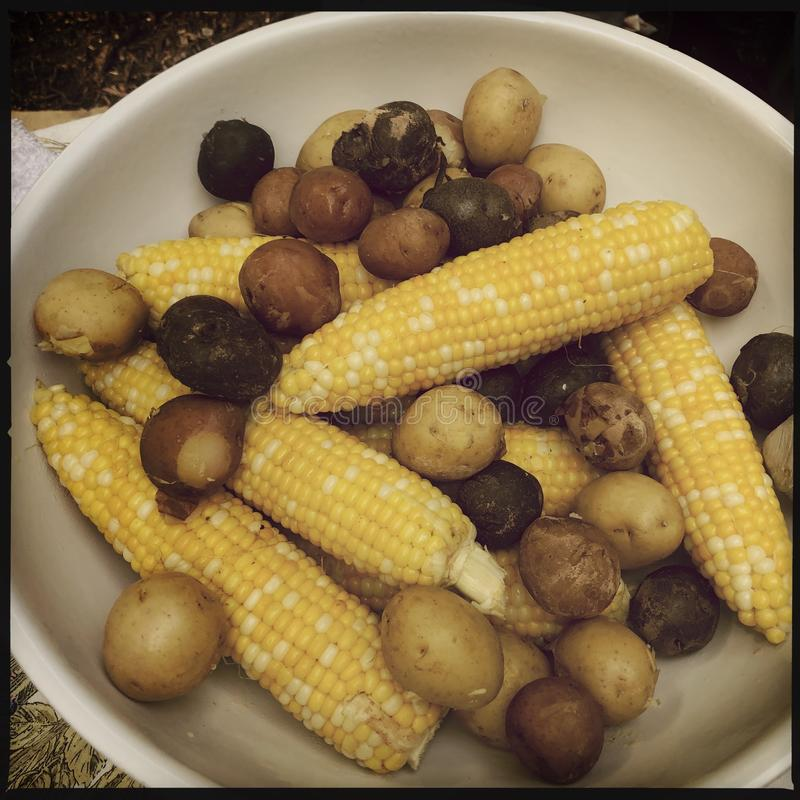 Fresh corn and potatoes royalty free stock images