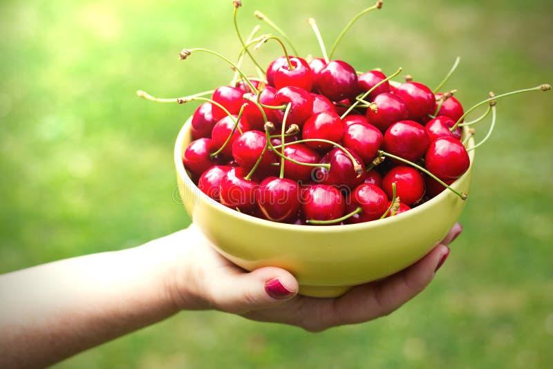 Bowl of freshly picked sweet cherries stock image