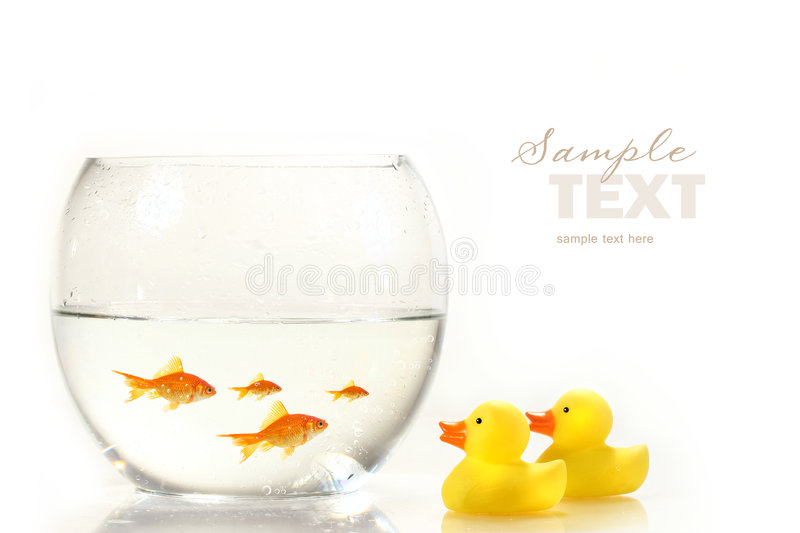 Download Bowl With Goldfish And Little Rubber Ducks Stock Image - Image: 6616131