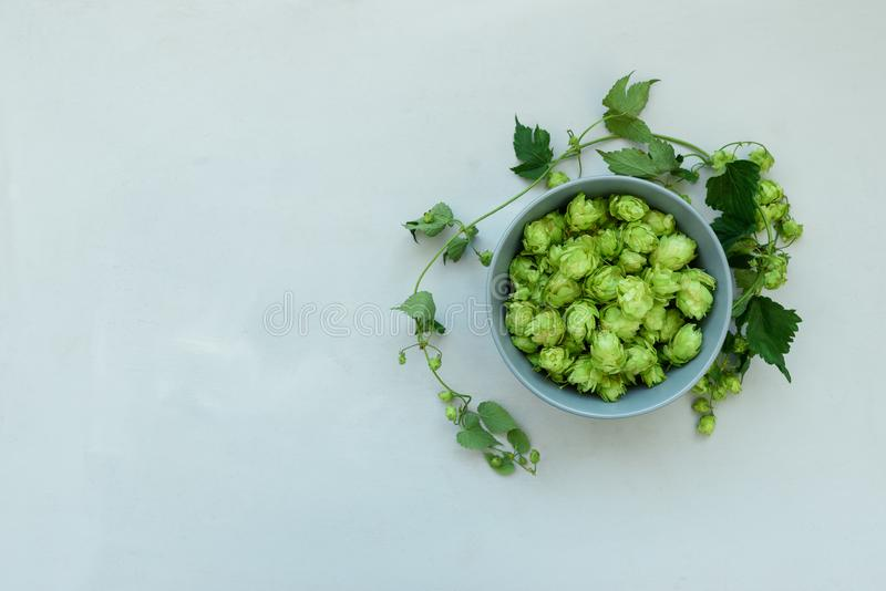 Bowl with hop cones on gray wooden background. Harvesting or brewery concept. Top view. Flat lay.  stock photos