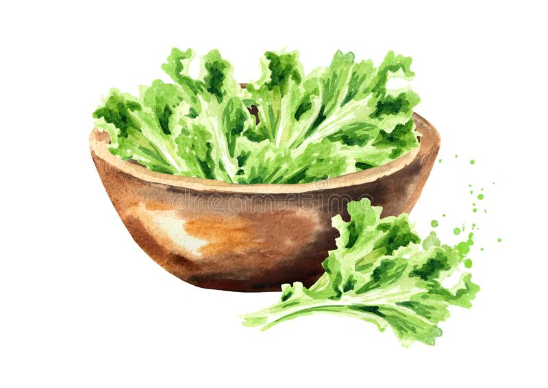 Bowl with Lettuce. Watercolor hand drawn illustration, isolated on white background.  royalty free stock photos