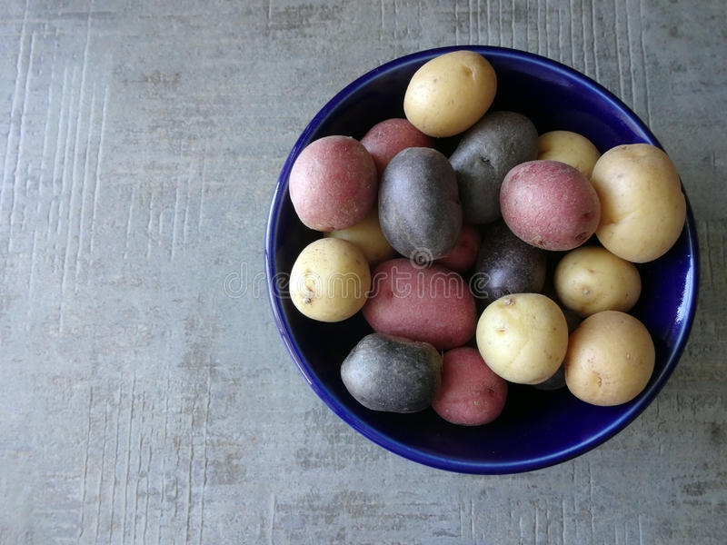 Bowl of Multi-Colored Potatoes. Looking at a Bowl of Multi-Colored Potatoes from Above against a Grey Background royalty free stock images